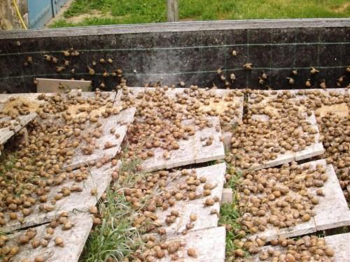 esempio business plan allevamento lumache
